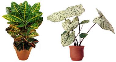 Variedad de plantas de ornato praderasdeagua otras for Viveros en neuquen