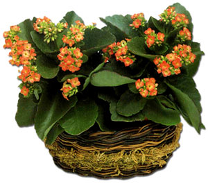 El cuidado de las plantas y el jardin las plantas con - Plantas con flor de interior ...